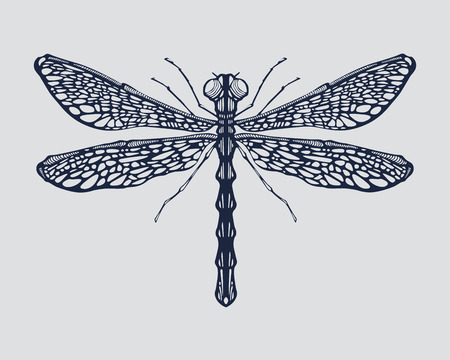 Hand drawn vector illustration or drawing of a dragonfly