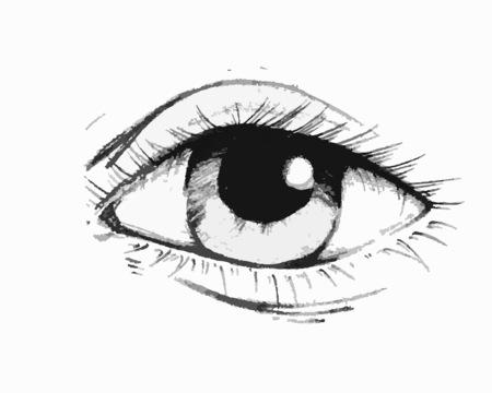 lash: Hand drawn vector illustration or drawing of an eye