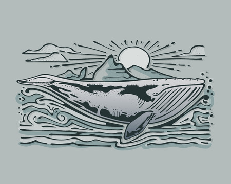 Hand drawn vector illustration or drawing of a gray whale in the sea