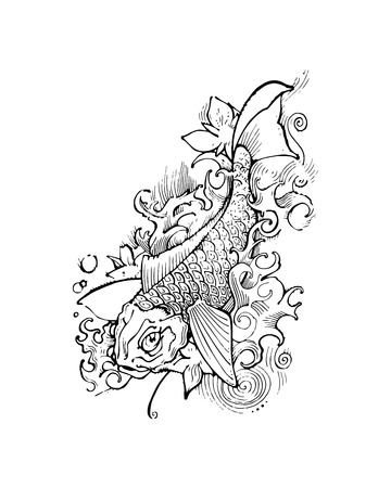 koi: Hand drawn vector illustration or drawing of a koi fish