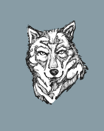 Hand drawn vector illustration or drawing of a wild wolf