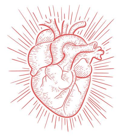 arteries: Heart on red b