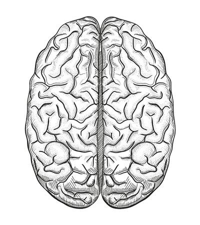 Brain een Stockfoto - 36630162