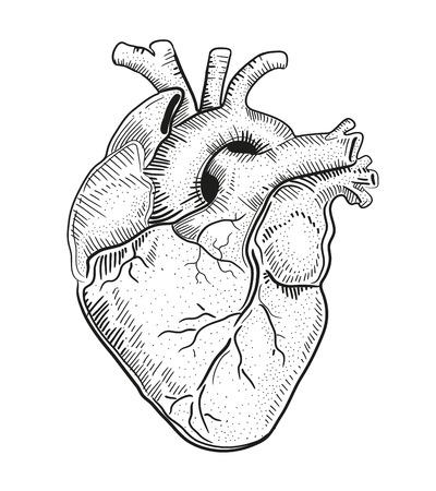 dessin coeur: Coeur d'un Illustration