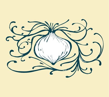 Hand drawn vector illustration or drawing of a white onion 向量圖像