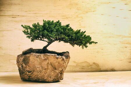 Fotografía de un árbol de los bonsai japonés tradicional Foto de archivo - 42199090