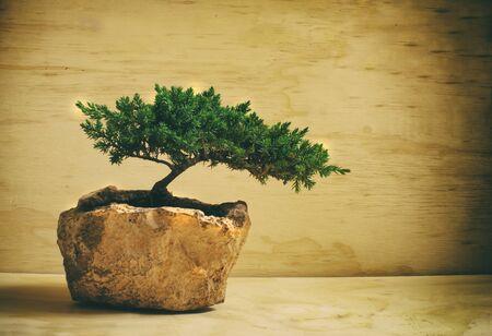 Fotografía de un árbol de los bonsai japonés tradicional Foto de archivo - 42199094