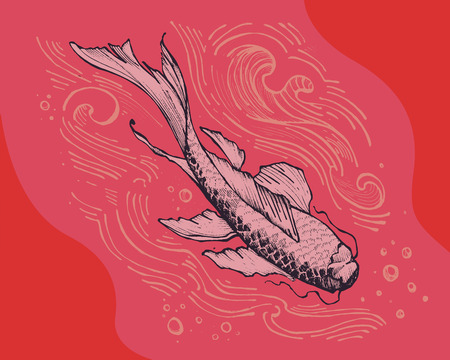 legendary: Hand drawn vector illustration or drawing of a traditional japanese koi fish Illustration