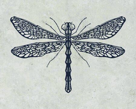 Illustration ou le dessin d'une libellule aux ailes ouvertes Banque d'images - 50173032