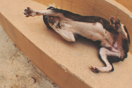 Photograph of a dog in a weird funny position Imagens