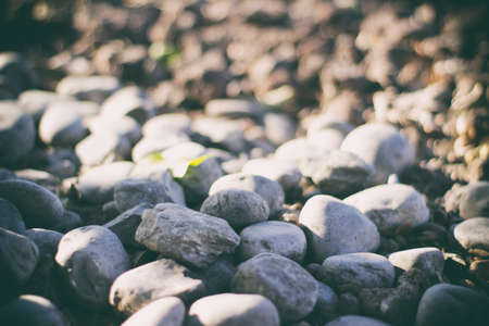 smooth stones: Photograph of some river gray smooth stones Stock Photo