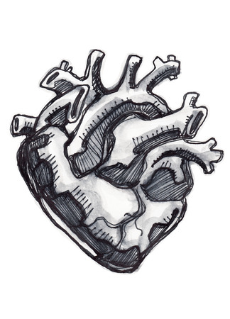 Hand drawn illustration or drawing of a human heart
