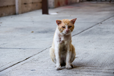 wounded: Photograph of a wounded and sad street cat