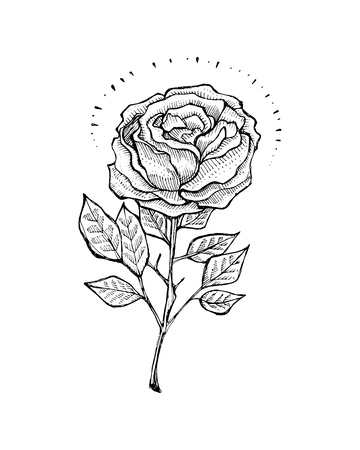 rose tattoo: Hand drawn vector illustration or drawing of a rose in a tattoo style