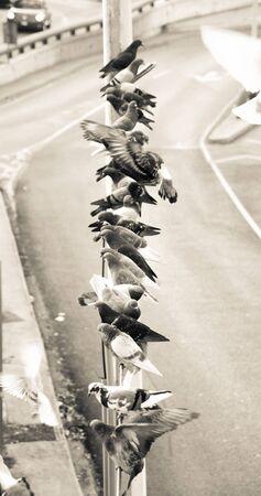 beak doves: Photograph of some doves in an urban scene
