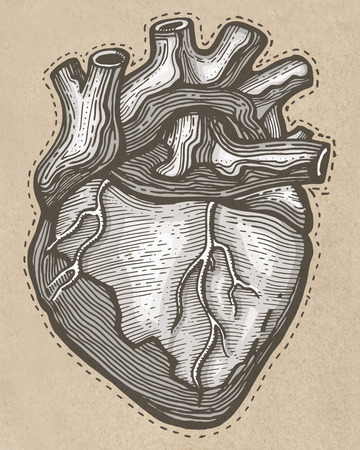Hand drawn illustrtion or drawing of a Human heart