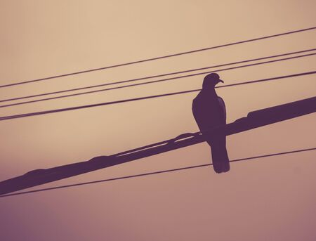 Photograph of a pigeon on electric wires and clear sky Lizenzfreie Bilder
