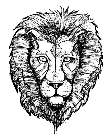 Hand drawn vector illustration or drawing of a lion head Lizenzfreie Bilder