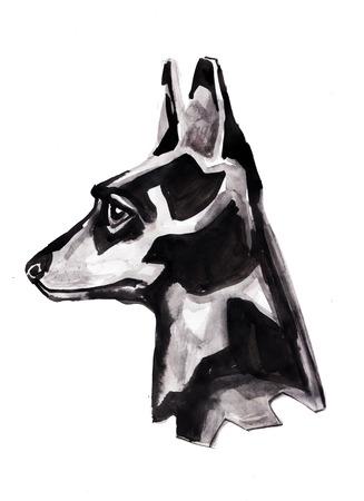 Hand drawn ink illustration or drawing of a doberman dog