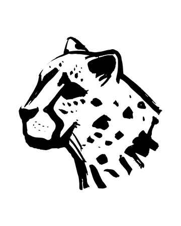 Hand drawn vector illustration or drawing of a cheeta head