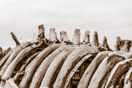 photograph of a detail of a skeleton of a whale Stock fotó