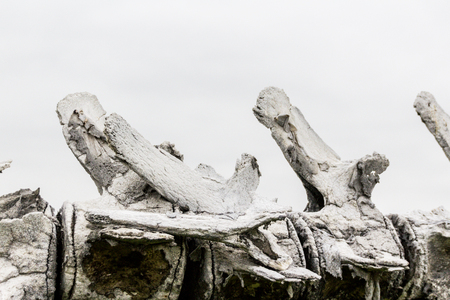 고래의 골격의 세부 사진