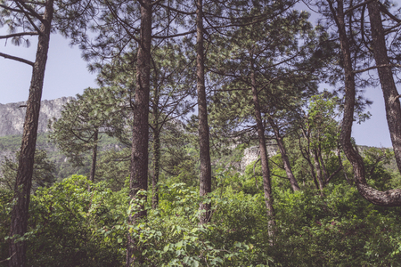 Photograph of some trees in green natural forest Stok Fotoğraf