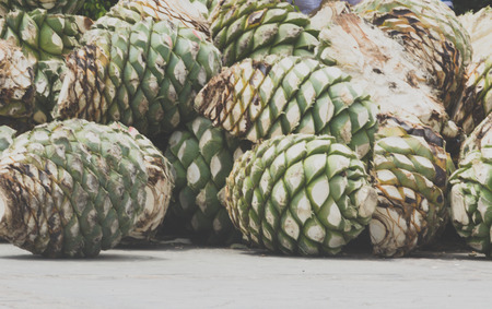 Photograph of some agave hearts from Oaxaca Mexico 版權商用圖片