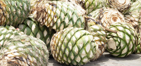 Photograph of some agave hearts from Oaxaca Mexico Stock Photo