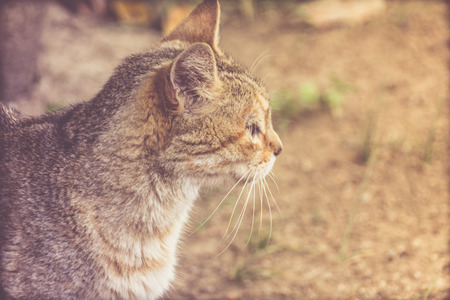 Photograph of a cat portrait and blurred background in outdoors Stock Photo