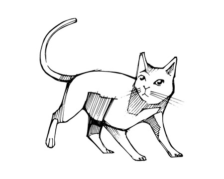 Hand drawn vector ink illustration or drawing of a cat 版權商用圖片