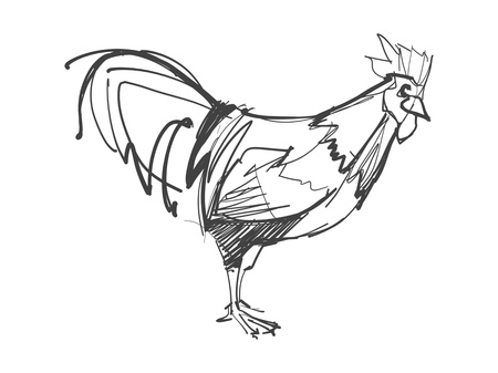 Hand drawn digital illustration or drawing of a rooster