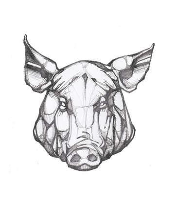 Hand drawn illustration or drawing of Pig head pencil sketch Stok Fotoğraf