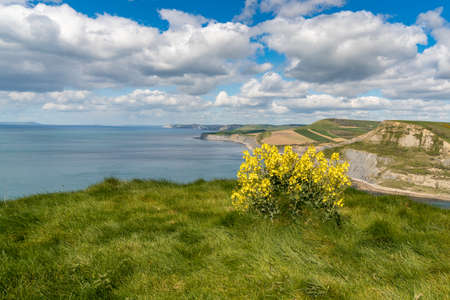 View from the South West Coast Path over the Jurassic Coast, Dorset, UK Stock Photo