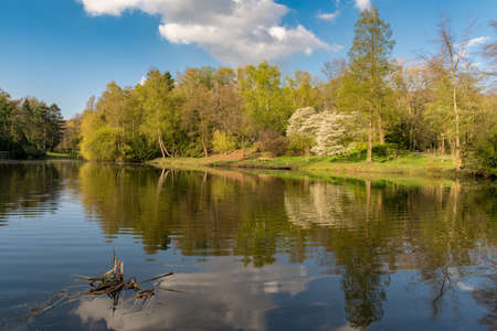 Trees on the shore of the Lake at the Ehrenmal Wittringen reflecting in the water, Gladbeck, North Rhine Westphalia, Germany