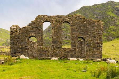 ブレナウ・フェスティニオグ、グウィンド、ウェールズ、英国の近くのカペル・ロシドの遺跡 - いくつかの羊の休息と