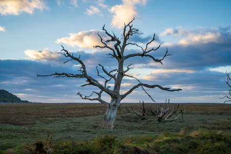 A tree trunk in the evening light over the Porlock Marshes, Somerset, England, UK Stok Fotoğraf