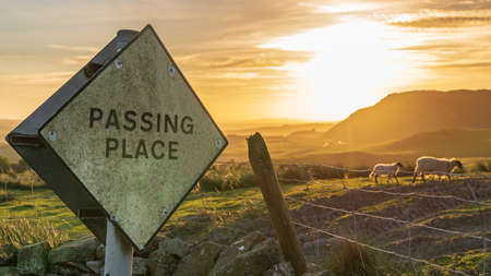 Sign: Passing place - with some sheep and the setting sun in the Yorkshire Dales landscape near Settle, North Yorkshire, England, UK