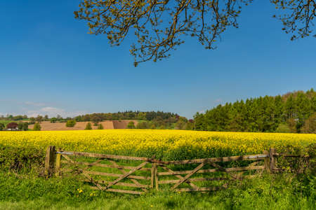 A closed gate in front of a rapeseed field, seen near Bishop's Castle, Shropshire, England, UK Standard-Bild