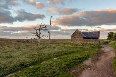 A tree trunk and an old barn in the evening light over the Porlock Marshes, Somerset, England, UK