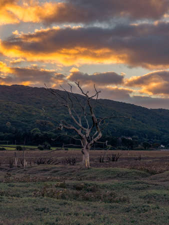 A tree trunk in the evening light over the Porlock Marshes, Somerset, England, UK Фото со стока