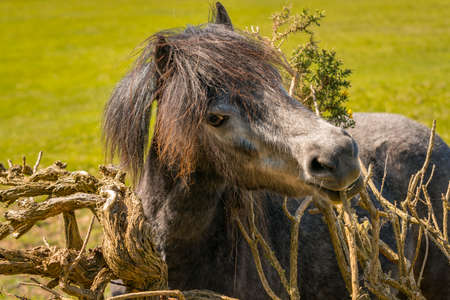 The happy horse - a smiling horse on a meadow Stock Photo