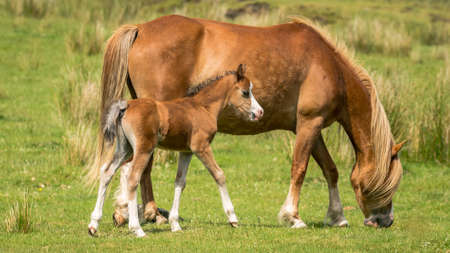 A horse and a foal on a meadow