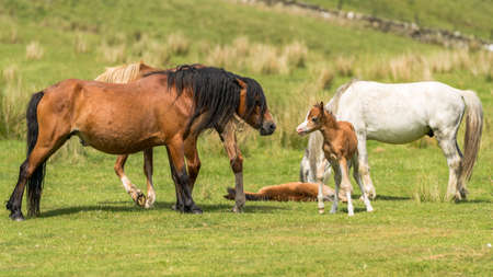 Horses and foals on a meadow