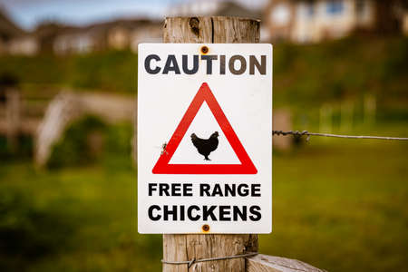 Sign: Caution, free range chickens, seen in St Bees, Cumbria, England, UK