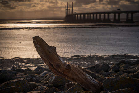 A piece of driftwood in the evening light, with The Prince of Wales Bridge in the background, seen from Severn Beach, South Gloucestershire, England, UK Reklamní fotografie