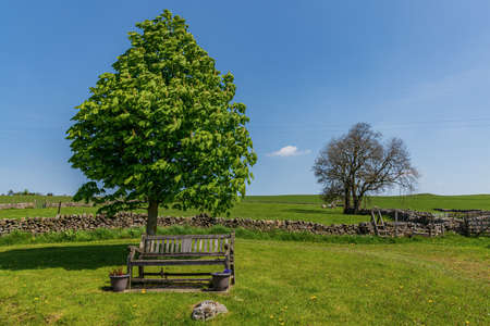 A bench and a tree in Lower Wharfedale, near Hartlington, North Yorkshire, England, UK