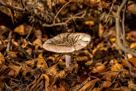A mushroom in the autumn foliage Banco de Imagens