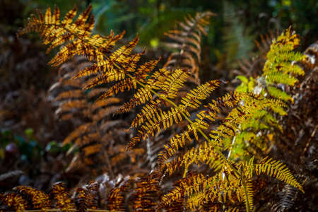 Ferns in the forest illuminated by sunlight