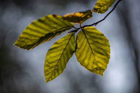 leaves in the forest illuminated by a bit of sunlight Banco de Imagens